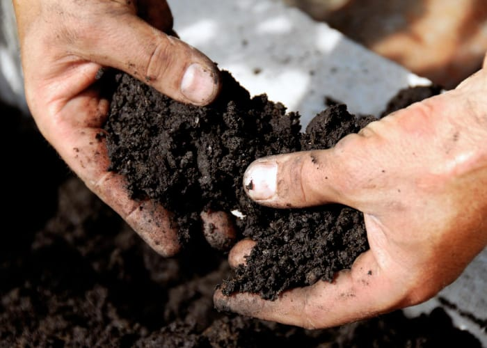 Chicago Garden Soil